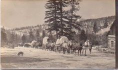 A string of freight wagons circa 1900/1910