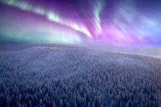 In the heart of Lapland, Finland, lies a private eco-luxury lodge - the ultimate place to view the Northern Lights. Aurora Borealis, The Winter Guest, Places To Travel, Places To Visit, Arctic Animals, Outside World, Arctic Circle, Wilderness, Airplane View