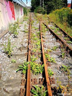 Mauer mit bunten Graffiti an einer stillgelegten Bahnlinie mit rostigen Gleisen in Münster in Westfalen im Münsterland