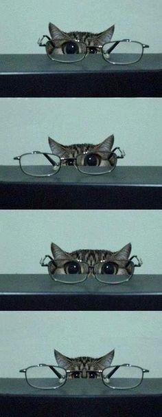 Cat Eye Glasses 졸귀야 졸귀