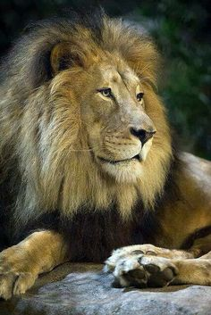 His Majesty..
