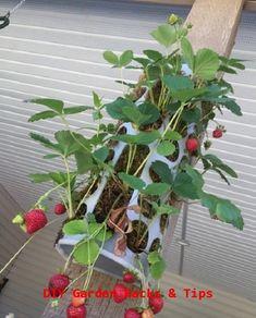 21 Diy Ikea Hacks For Plant Growers Gardeners - Balcony Garden Strawberry Planters, Strawberry Garden, Garden Web, Garden Junk, Garden Cart, Container Gardening, Gardening Tips, Balcony Gardening, Organic Gardening