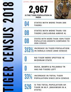 Tiger Census 2018 Report - Tiger Population in India 2019 Population Of India, Tiger Habitat, Project Tiger, Tiger Species, Tiger Conservation, Arunachal Pradesh, Wild Tiger, States Of India