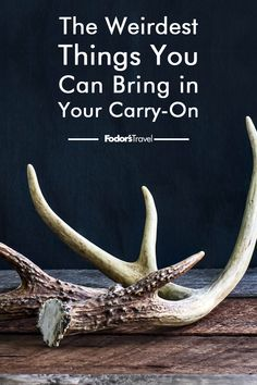 From live animals to lightsabers, there are a number of surprising things that are TSA-approved to bring on board a plane with you. #travel #traveltips #weird #TSA #carryon #carryonluggage #airtravel #airports #wanderlust #bucketlist #weirdtravel #travelinspiration