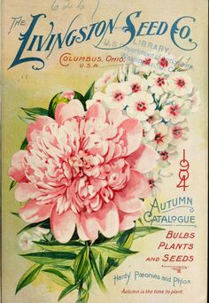 'The Livingston Seed Co 1904 Autumn Catalogue with an illustration of 'Hardy Paeonies and Phlox. Vintage Labels, Vintage Ephemera, Vintage Cards, Vintage Postcards, Art Vintage, Vintage Images, Vintage Prints, Vintage Pictures, Vintage Seed Packets