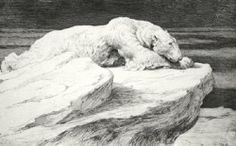 Polar Bear at Rest (Restrike Etching) by Herbert  Dicksee (English 1862-1942)