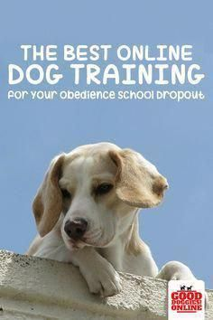 Obedience Training Refer To A Wide Variety Of Abilities And