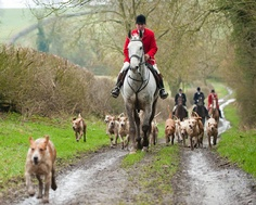 Foxhunting!I miss home!