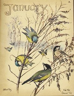 January print by Edith Holden - blue tit, great tit, like the ones we have in our garden!