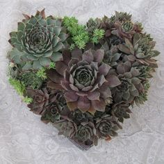 http://suculentasminhas.blogspot.com.br/2012/02/valentines-day.html   Coração de suculentas feito por Linda G. Estrin da California.