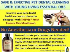 YLEO teeth cleaning for pets
