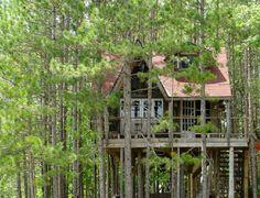 Weekend Fun: Lynne Knowlton's tree house