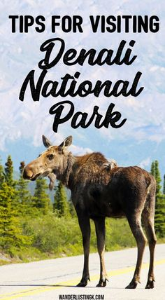 Tips for visiting Denali National Park in Alaska Planning to visit Denali National Park? Tips for Denali National Park Lodging, things to do in Denali National Park, & hiking in Denali National Park. Alaska Travel, Travel Usa, Alaska Trip, Travel Tips, Alaska Camping, Travel Videos, Cruise Travel, Travel Packing, Solo Travel