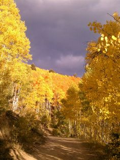 Aspens in Santa Fe, NM
