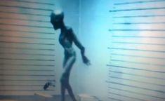 EXTRATERRESTRE ONLINE: Alienígena capturado nesse ano de 2016 se torna viral na internet, mais um fake ou seria real? (VÍDEO)