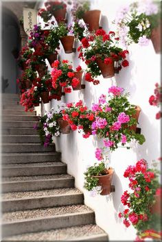 love this Spanish garden style, especially the red geraniums hanging on the wall - this would be nice on our white stucco walls Front Yard Landscaping Pictures, Landscaping Ideas, Beautiful Gardens, Beautiful Flowers, Spanish Garden, Red Geraniums, Potted Geraniums, Landscape Plans, Dream Garden