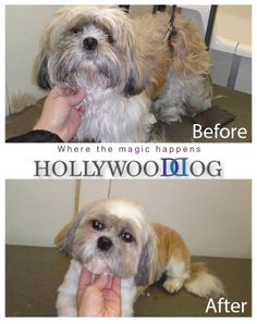 Shih Tzu mobile dog grooming before and after