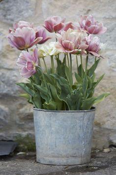 tulips-in-a-zinc-planter-britt-willoughby-dyer-gardenista.jpg