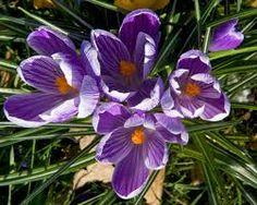 flowers plants - Google Search