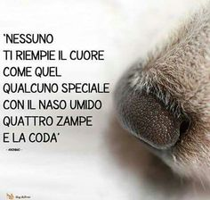 Frasi Animals And Pets, Funny Animals, Cute Animals, I Love Dogs, Cute Dogs, Most Beautiful Words, Jack Russell Terrier, Dogs Of The World, Dogs And Puppies