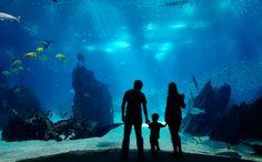 """Aquarium """"Poema del Mar"""" in Las Palmas de Gran Canaria nimmt letzte Hürden"""