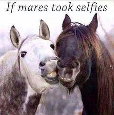 If mares took selfies! XD