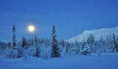 Winter Wonderland, Snow, Outdoor, Outdoors, Outdoor Games, Human Eye