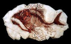 Fossilized Fish | Norton Ceramics & Resin Models - Fossil Fish & Fossils