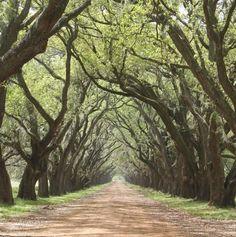 Evergreen Plantation LA  #landscape #evergreen #plantation