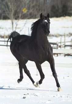 The horse I want to own someday! A black stallion!... Has to be black like my mommas :))