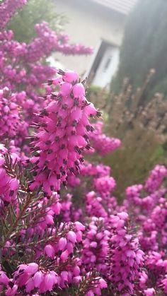 Fialová zahrada