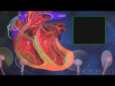 Atriyal, Fibrilasyon, Kalp Hastalıkları, Hacamat, Sülük, Tedavi, Akupunk...