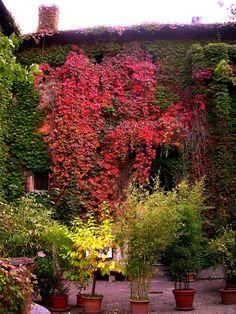 The colours of autumn in Milan #italy #italia #milano