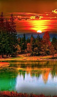Lily Pad Sunset