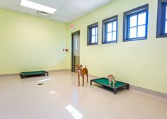Indoor dog rooms on pinterest dog rooms indoor dog houses and dog