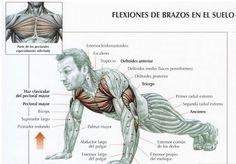 flexiones1