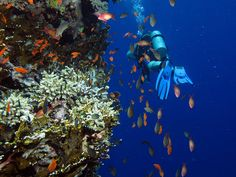Lots of anthias. Big Brother Island, Red Sea, Egypt