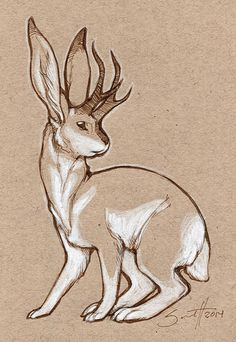 jackalope by Savannah Horrocks