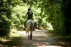 Arabian stallion - A walk in the woods...