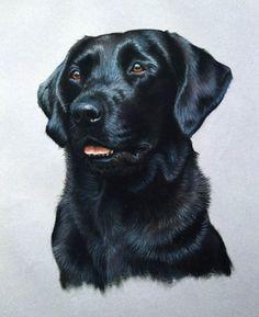 Labrador Retriever painting by Heather Irvine