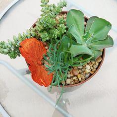 Serving Bowls, Floral Design, Succulents, Tableware, Plants, Dinnerware, Floral Patterns, Tablewares, Succulent Plants