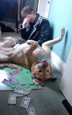 Game nights are always so much better with dogs around! | 21 Reasons Dogs Are…