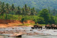 Un circuit en pension complète qui inclut les incontournables du Sri Lanka, de Anuradhapura à Kandy et en passant par Peradeniya à bord d'un train pour arriver à Nawalapitiya.