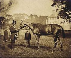 "One of the oldest pictures of a Thoroughbred ever taken. Wild Dayrell, born in 1852 and pictured as a 3 year old in 1855. Six generations from Herod and eight from the Godolphin Arabian, Wild Dayrell was described as ""one of the finest specimens of a racehorse"" ever seen."