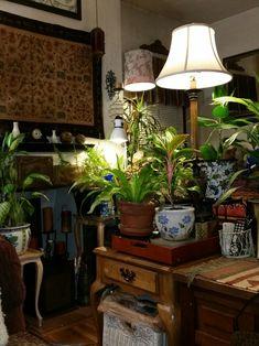 boho bohemian indoor garden plants texture low light hang lamps