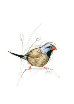 Australian Bird Print A5 Masked Finch by 56dollarsforbeancake, $13.50