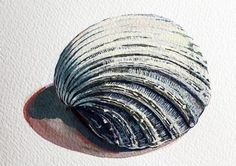 Emma Copley shares her process for painting a still life shell, on AccessArt