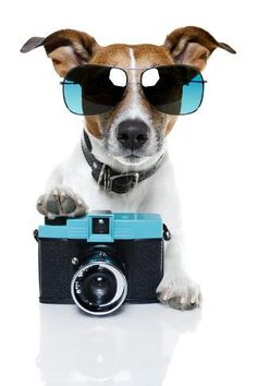 12 Photography Tips for Dog Owners - PawNation looks like Rexx! Perros Jack Russell, Jack Russell Dogs, Jack Russells, Dog Photos, Funny Photos, Kitten Photos, I Love Dogs, Cute Dogs, Awesome Dogs