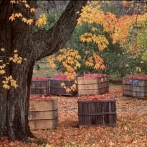 It's time to pick apples!