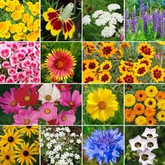 Bird & Butterfly Wildflower Seed MixThis mix contains a generous heaping of both annual and perennial wildflower species that are known to attract our winged friends. Suitable for all regions of North America.